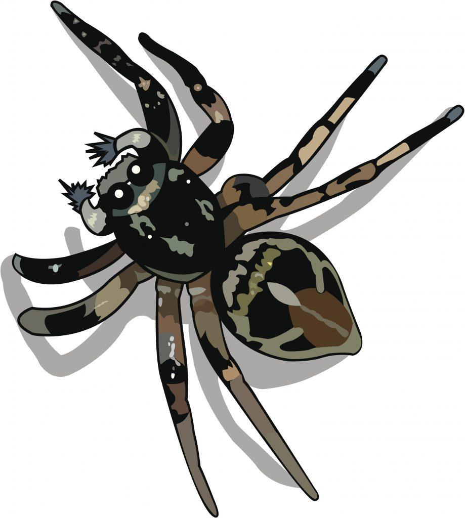 spider toon